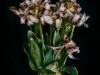 2.Platz – R.Kraning – Clubwettbewerb Blumenstrauß