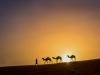©M.Steeb - Marokko - Caravane