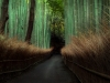 ©M.Steeb - Japan - Bamboo Forest